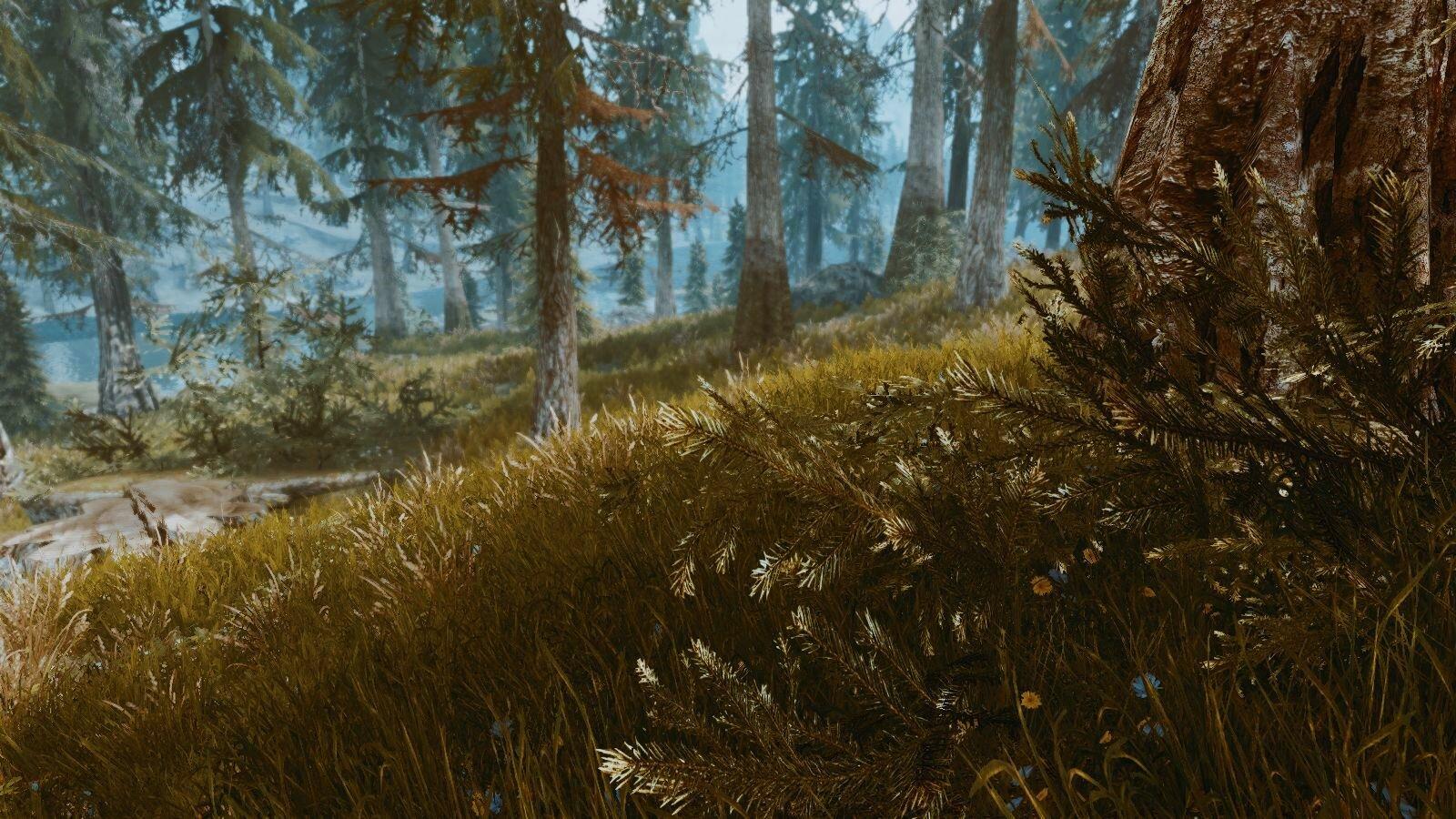 В лесу.. SkyrimSE (сборка 6.0)